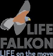 Life Falkon